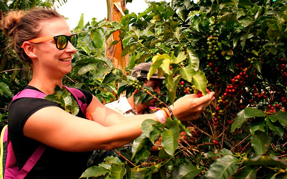 Tour de café cerca de Medellín Antioquia